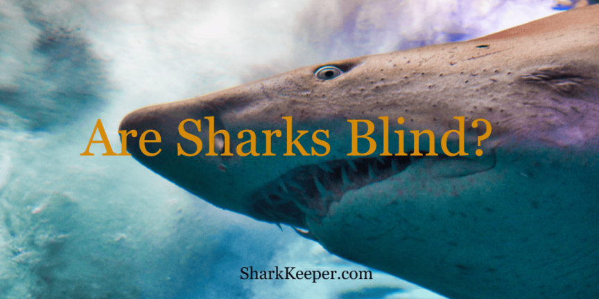 Are Sharks Blind