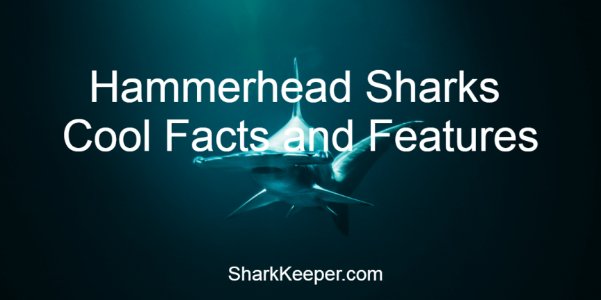 Hammerhead Sharks Cool Facts and Features