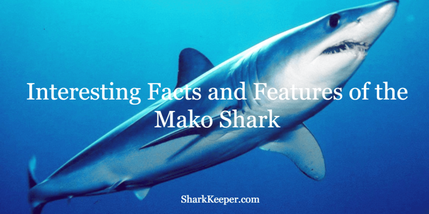 Interesting Facts and Features of the Mako Shark