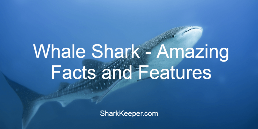 Whale Shark - Amazing Facts and Featu