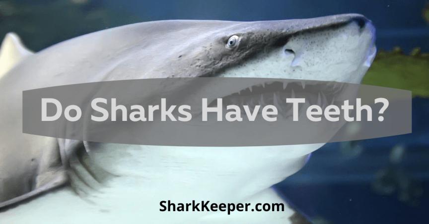 Do Sharks Have Teeth