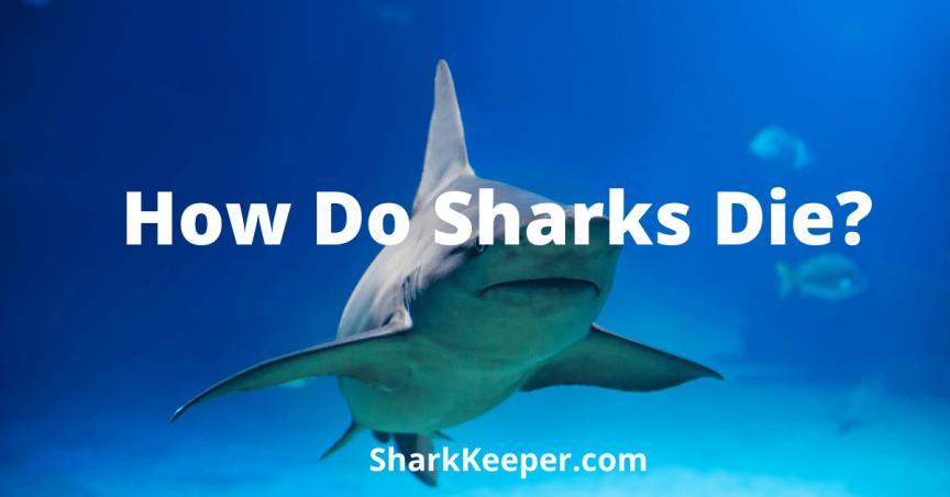 How Do Sharks Die