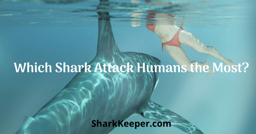 Which Shark Attack Humans the Most