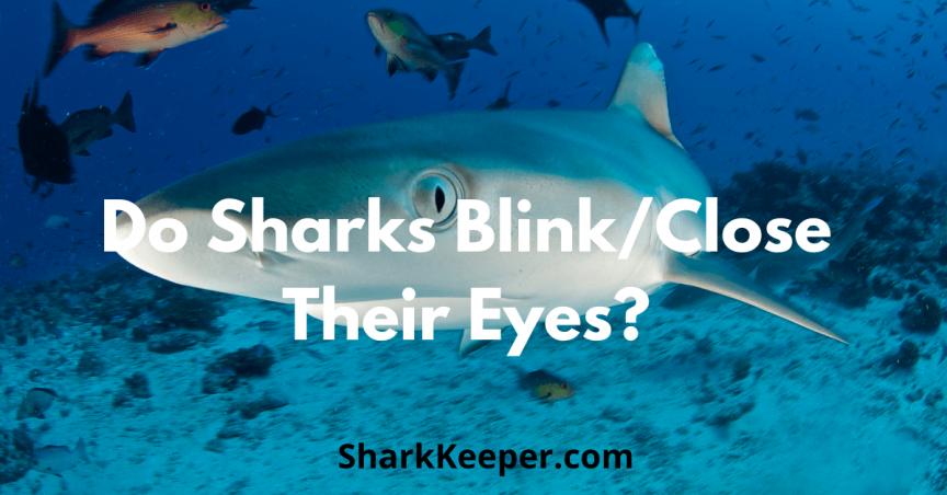 Do Sharks Blink/Close Their Eyes