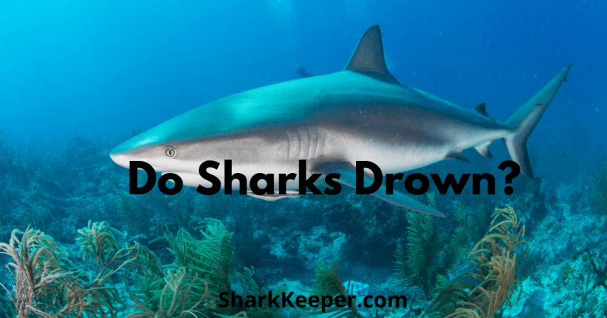 Do Sharks Drown? What Would Make a Shark Drown?