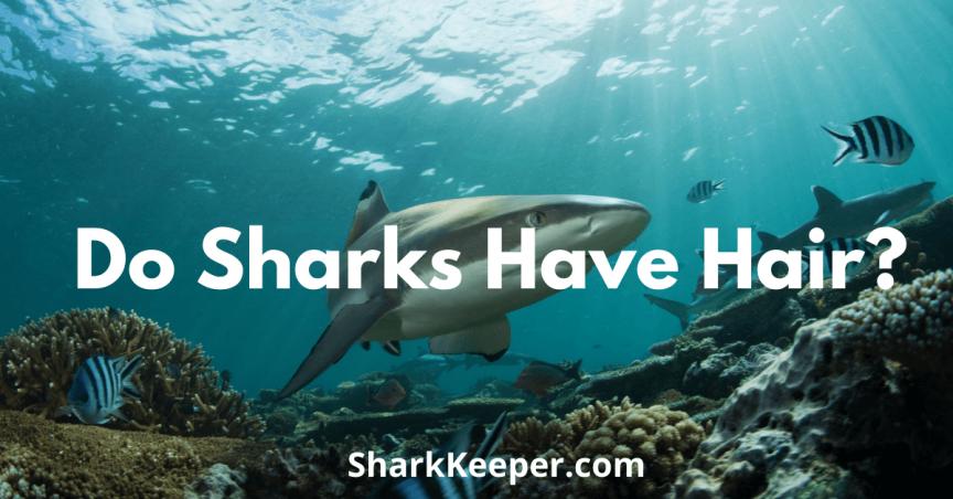 Do Sharks Have Hair