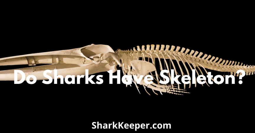 Do Sharks Have Skeleton