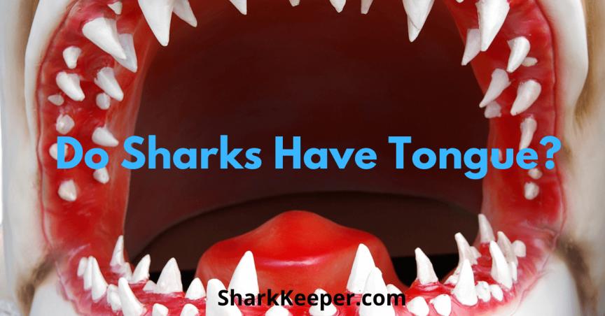Do Sharks Have Tongue