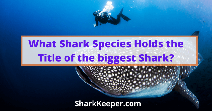 What Shark Species Holds the Title of the biggest Shark?
