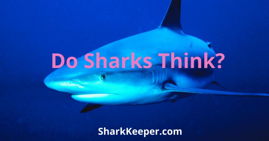 Do Sharks Think