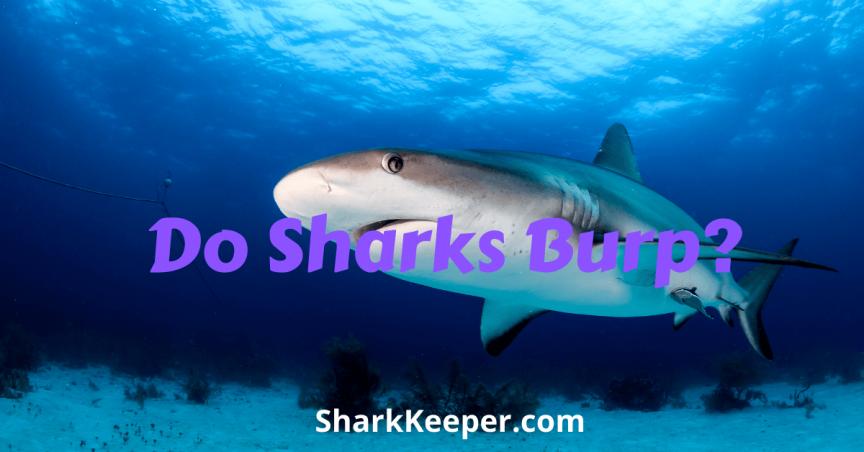 Do Sharks Burp?