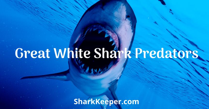 Great White Shark Predators