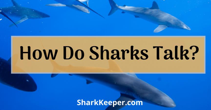 How Do Sharks Talk Do Sharks Talk Like Us