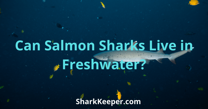 Can Salmon Sharks Live in Freshwater