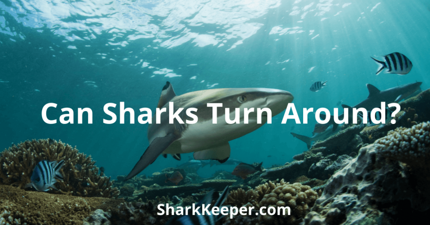 Can Sharks Turn Around?