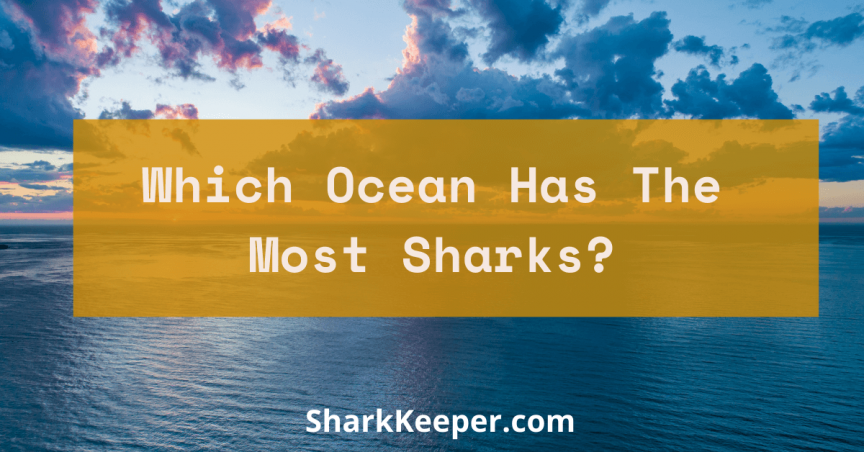 Which Ocean Has The Most Sharks?